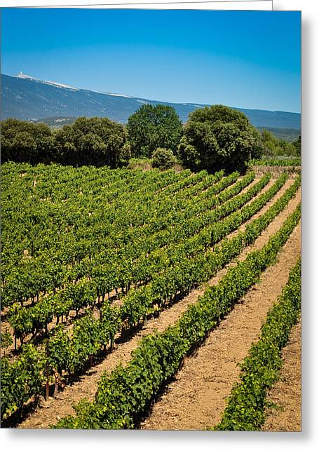 Blue Grapes Greeting Cards - French Vines Greeting Card by Phil Scarlett
