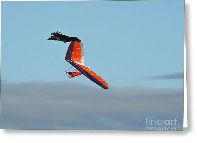 Best Sailing Photos Greeting Cards - Frequent Flyers Greeting Card by Scott Cameron