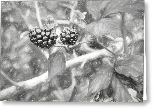 Fresh Alabama Blackberries In Black And White Greeting Card by JC Findley
