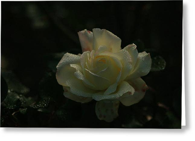 Terry Perham Greeting Cards - Fresh Dew Greeting Card by Terry Perham