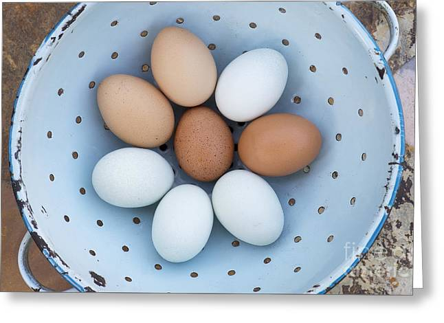 Fresh Food Greeting Cards - Fresh Eggs Greeting Card by Tim Gainey