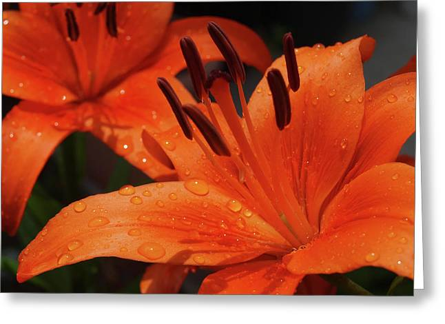 Rain Droplet Photographs Greeting Cards - Fresh Floral Delight Greeting Card by Teri Schuster