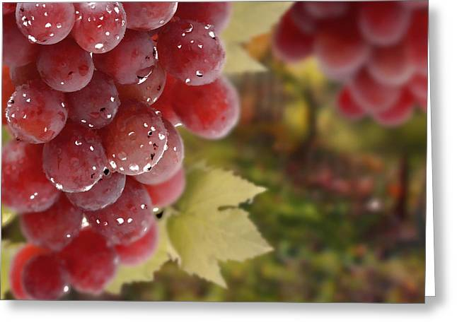 Fresh Grapes On Vine Greeting Card by Lanjee Chee