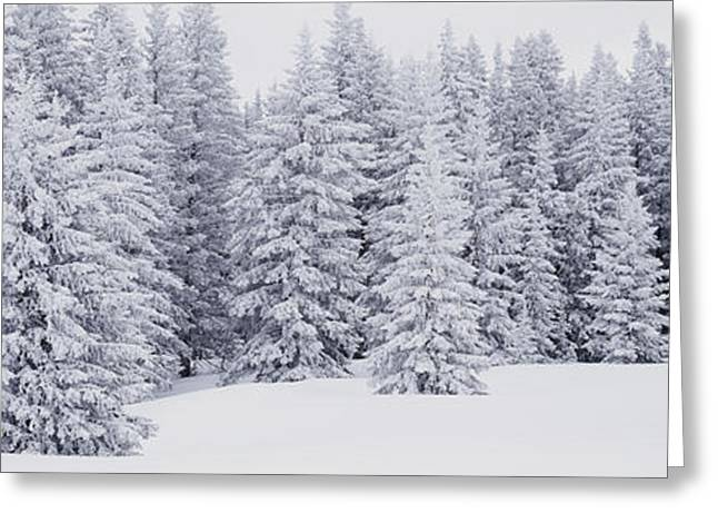 Wintry Photographs Greeting Cards - Fresh Snow On Pine Trees Taos County Nm Greeting Card by Panoramic Images