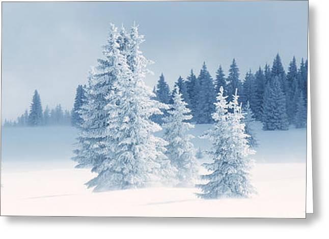 Wintry Photographs Greeting Cards - Fresh Snow On Pine Trees, Taos County Greeting Card by Panoramic Images