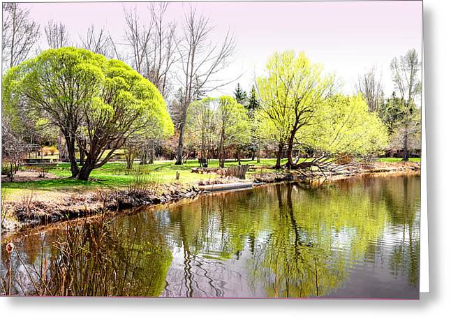 Decorate Greeting Cards - Fresh Spring Trees Greeting Card by Carol  Lux Photography