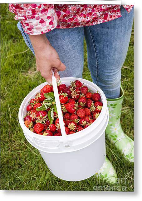 Fresh Strawberries Greeting Card by Elena Elisseeva