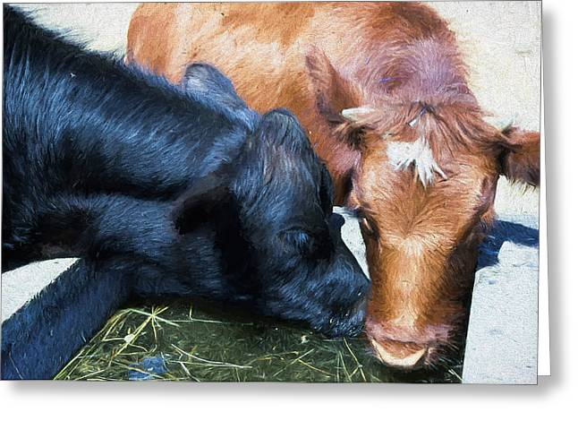 Angus Steer Greeting Cards - Fresh Water cows Greeting Card by Cathy Anderson