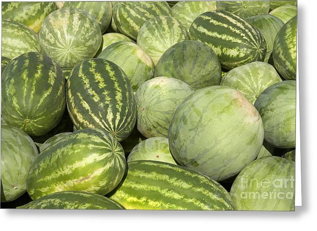 Watermelon Photographs Greeting Cards - Freshly Harvested Watermelons Greeting Card by Inga Spence