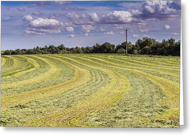 Freshly mown hay  Greeting Card by John Trax