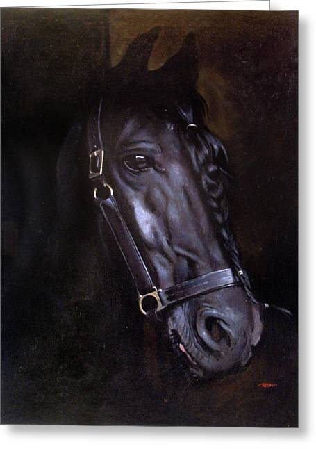 Friesian Greeting Card by Christopher Reid