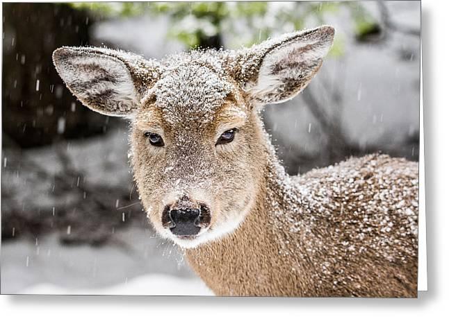 Does. Winter Greeting Cards - Friendly Doe Greeting Card by Derek Haller