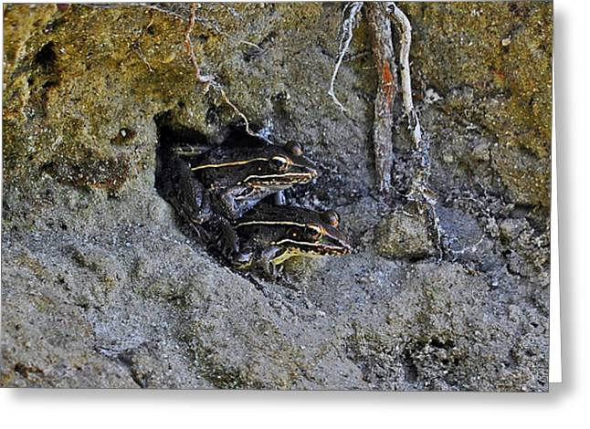 Friendly Frogs Greeting Card by Al Powell Photography USA