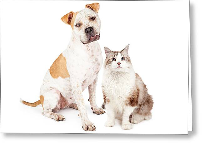 Friendly Pit Bull Dog And Pretty Cat Greeting Card by Susan Schmitz