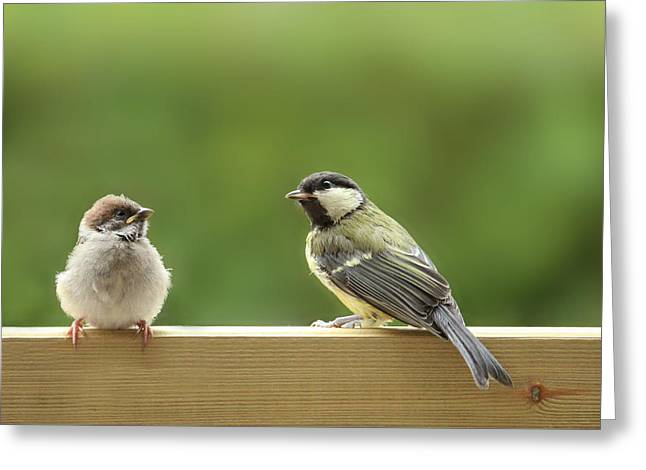Sparrow Greeting Cards - Friends Greeting Card by Heike Hultsch