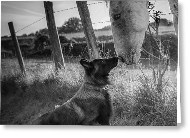 Dogs Photographs Greeting Cards - Friends Kiss ;-) Greeting Card by Christophe