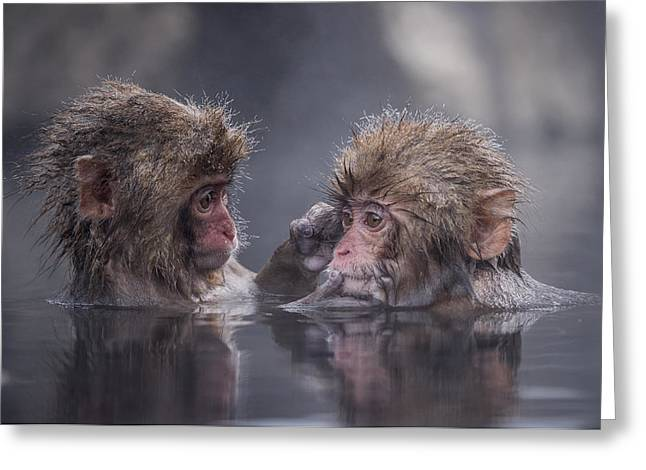 Apes Greeting Cards - Friends Greeting Card by Takeshi Marumoto
