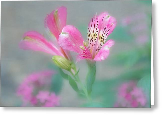 Alstroemeria Greeting Cards - Friendship - Alstroemeria Flower Greeting Card by Kim Hojnacki