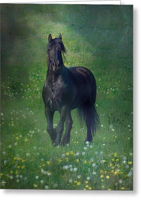 Equine Prints Greeting Cards - Friesian Mist Greeting Card by Fran J Scott