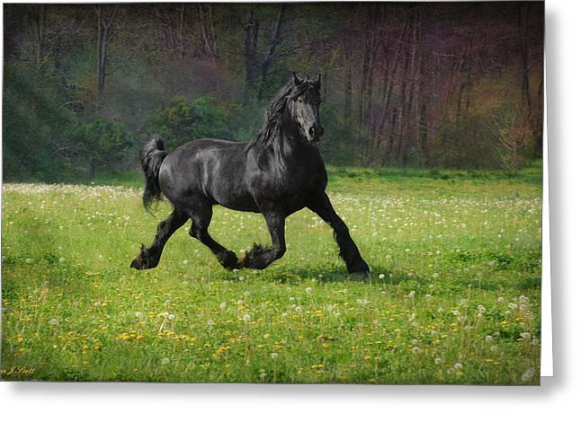 Trot Greeting Cards - Friesian Power Greeting Card by Fran J Scott