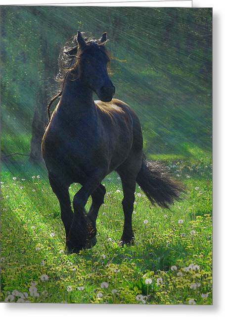 Friesian Sun Greeting Card by Fran J Scott