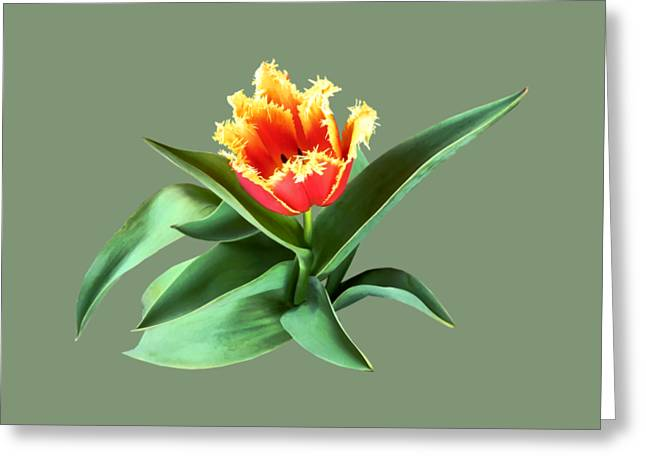 Frilly Orange Tulip Greeting Card by Susan Savad