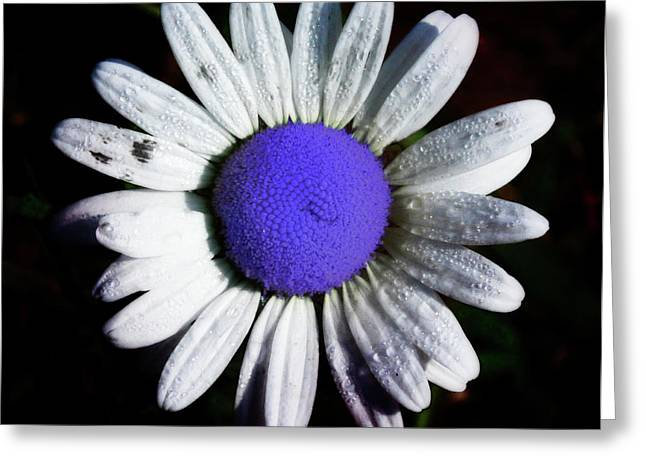 Daiseys Greeting Cards - Fringe - Blue Flower Greeting Card by Bill Cannon