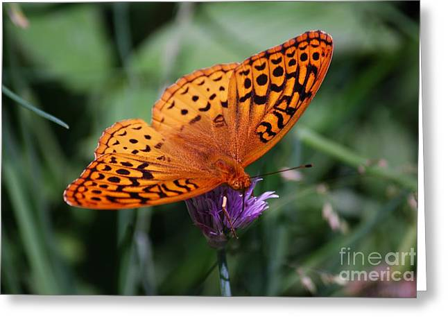 Randy Greeting Cards - Fritillary Wings Greeting Card by Randy Bodkins