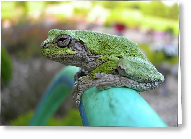 Frog Watering Plants Greeting Card by Randy Rosenberger