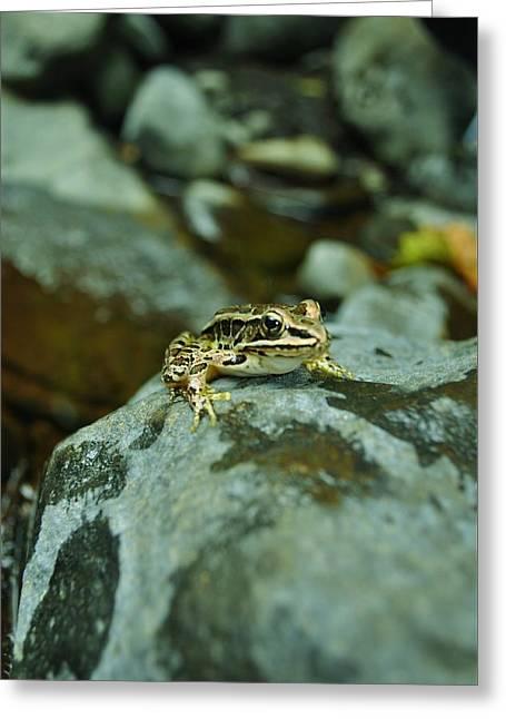 Froggy Greeting Card by Brynn Ditsche