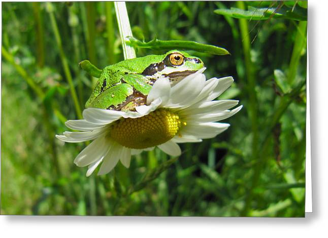Tracey Levine Greeting Cards - Froggy went a courtin Greeting Card by Tracey Levine