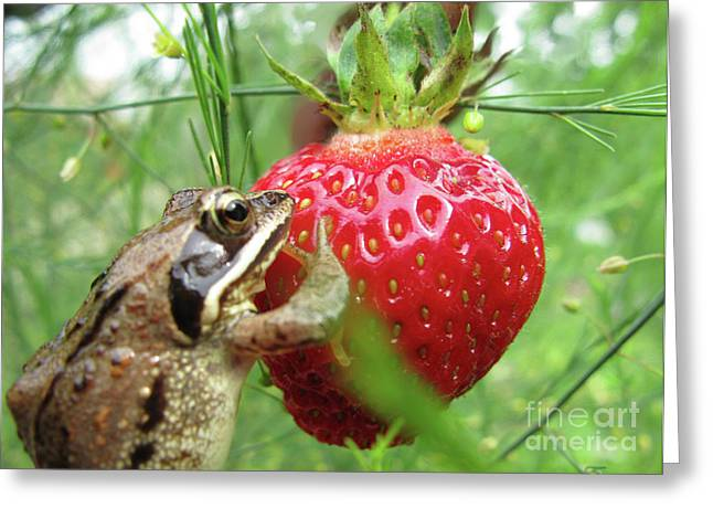 Ausra Paulauskaite Greeting Cards - Frogs Love Strawberries Too  Greeting Card by Ausra Paulauskaite