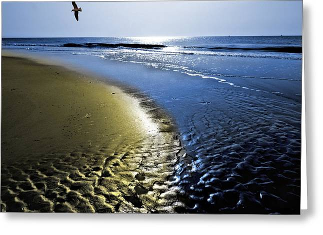 Sea Birds Greeting Cards - From Dawn into Day Greeting Card by Laura Ragland
