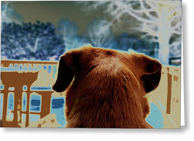 Puggle Greeting Cards - From Her Perspective   Greeting Card by Steven  Digman