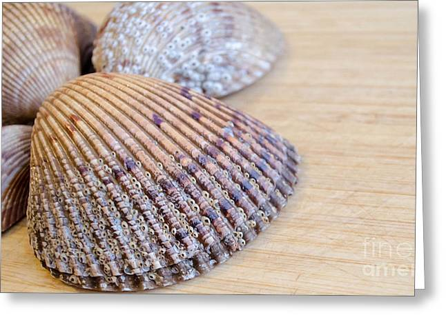 Shell Texture Greeting Cards - From the Beach Greeting Card by Andrea Anderegg