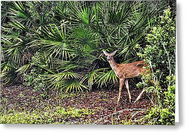 From The Palmetto Bushes Greeting Card by Jan Amiss Photography