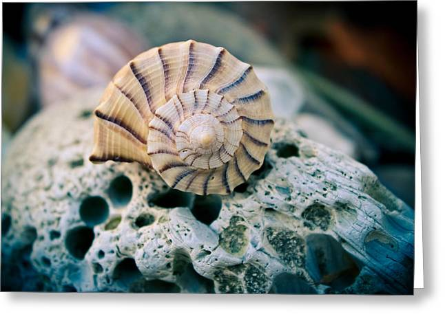 Shell Texture Greeting Cards - From the Sea Greeting Card by Colleen Kammerer