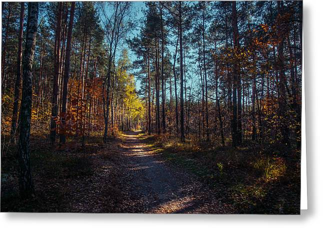 Fall Colors Greeting Cards - From the Shadow to the Light Greeting Card by Dmytro Korol