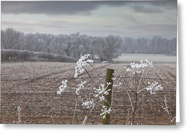 Snow Covered Fence Greeting Cards - Frost-covered Rural Field Cumbria Greeting Card by John Short