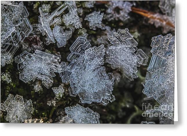 Frost Greeting Card by Veikko Suikkanen