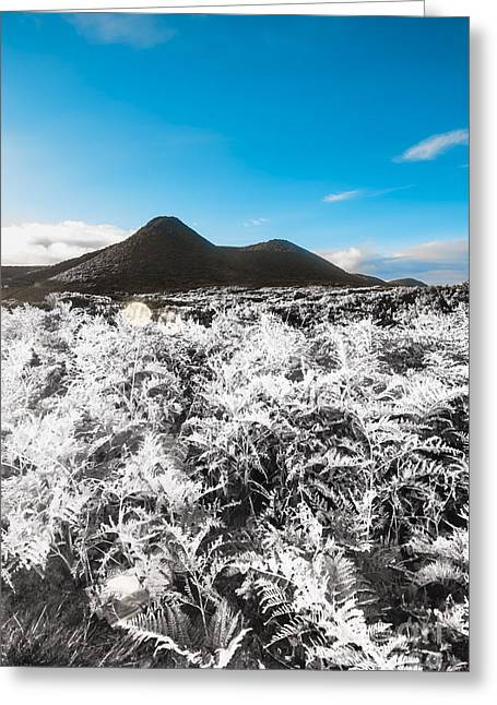 Frosted Over Hinterland Greeting Card by Jorgo Photography - Wall Art Gallery