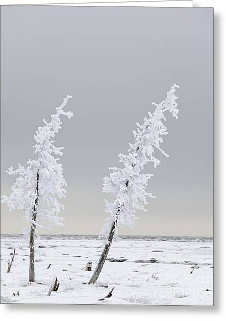 Frosted Twins Greeting Card by Tim Grams