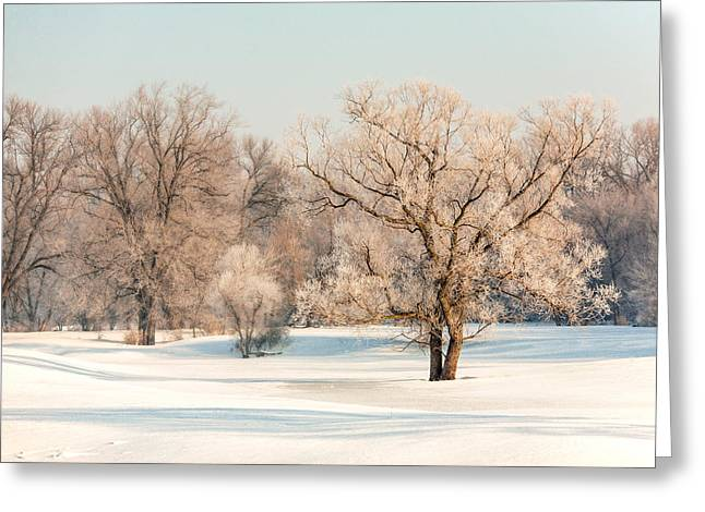 Frosty Forest Greeting Card by Todd Klassy