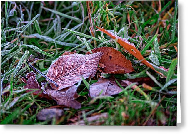 Wintry Photographs Greeting Cards - Frosty Leaf Greeting Card by Rick Berk