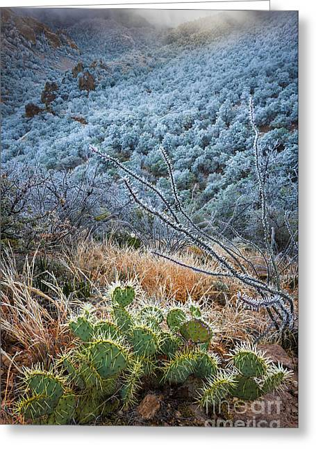 Basin Park Greeting Cards - Frosty Prickly Pear Greeting Card by Inge Johnsson