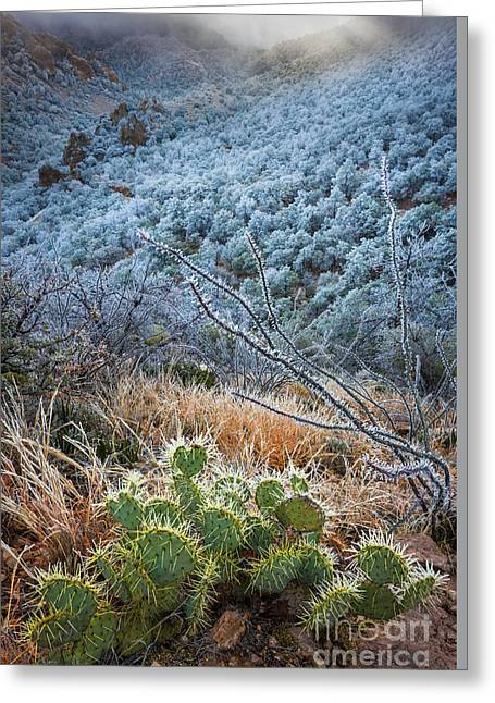 Big Basin Greeting Cards - Frosty Prickly Pear Greeting Card by Inge Johnsson