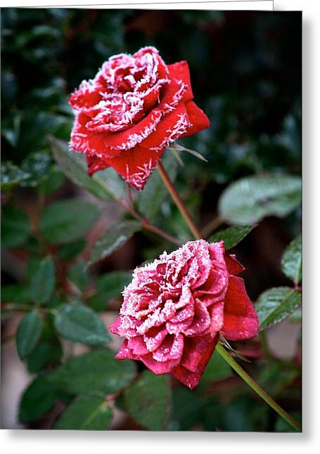 Frost Pyrography Greeting Cards - Frosty Rose Greeting Card by Calvin Nelson