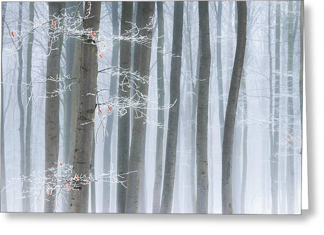 Fog Greeting Cards - Frozen Beauty Greeting Card by Heiko Gerlicher