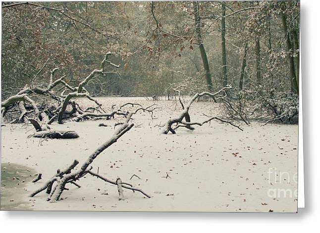 Muted Photographs Greeting Cards - Frozen Fallen Wide Greeting Card by Andy Smy