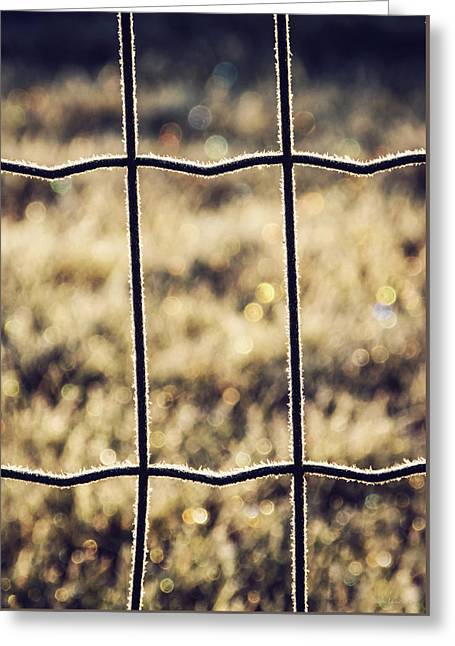 Separate Greeting Cards - Frozen Fence Greeting Card by Wim Lanclus